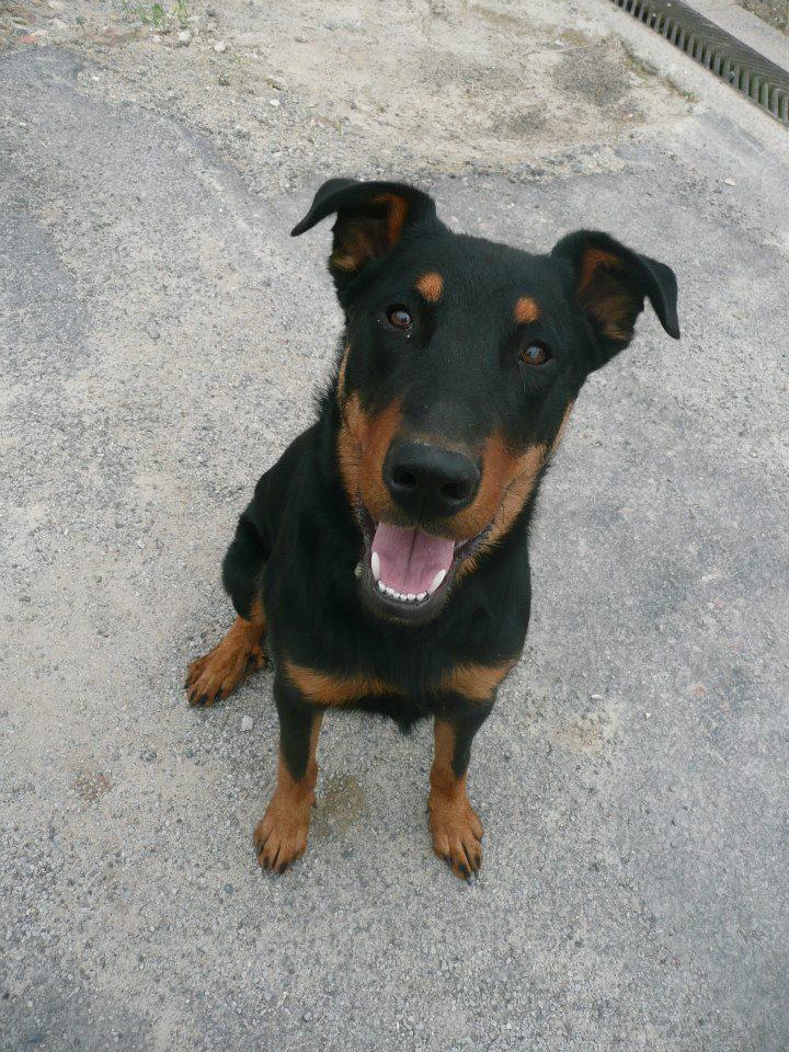 Hooper le chien de A.Rayon