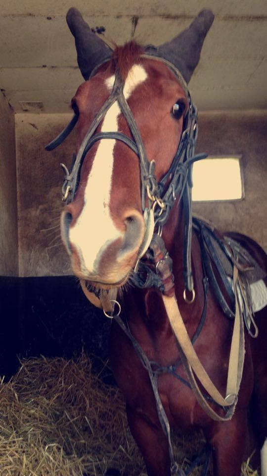 D'Artagnan du Pont 22 avr 2016 4
