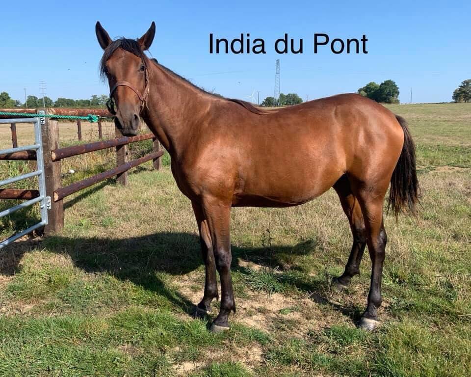 India du Pont