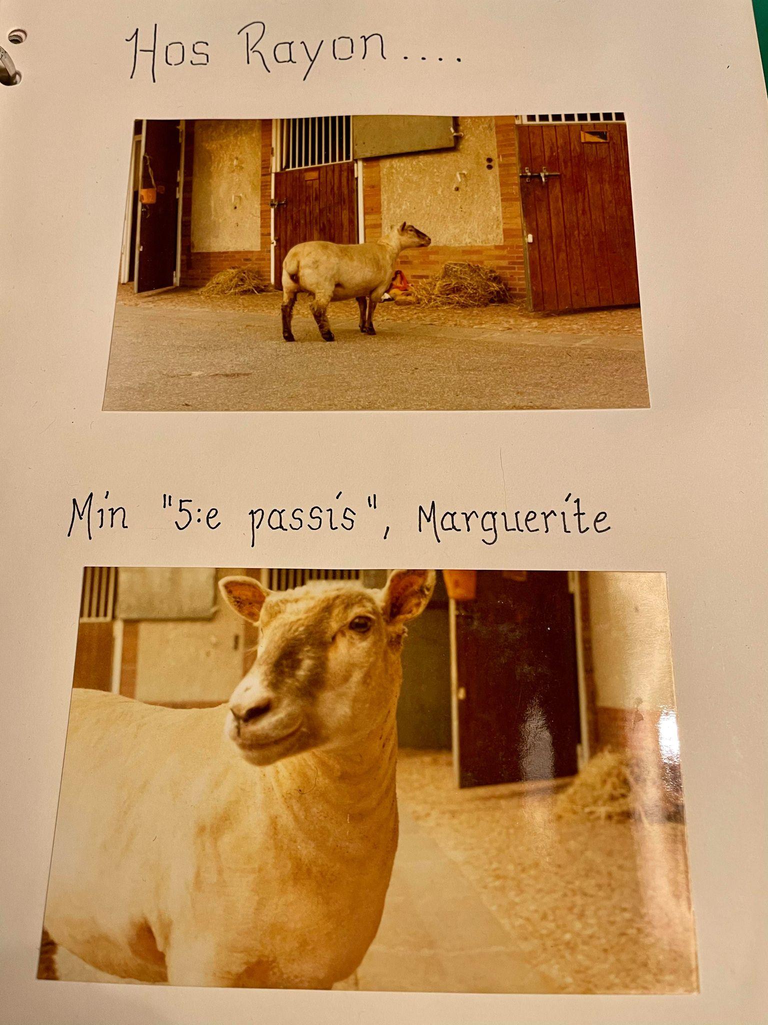 2021 02 24 Marguerite
